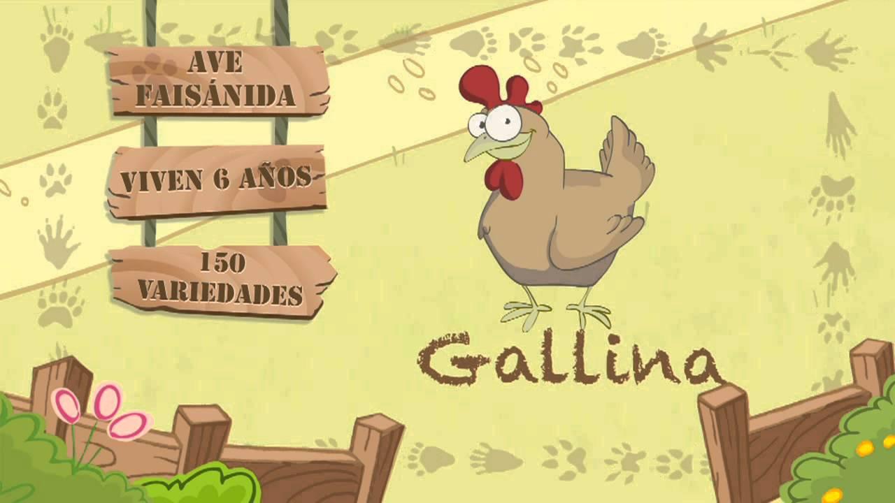 Las características de la GALLINA