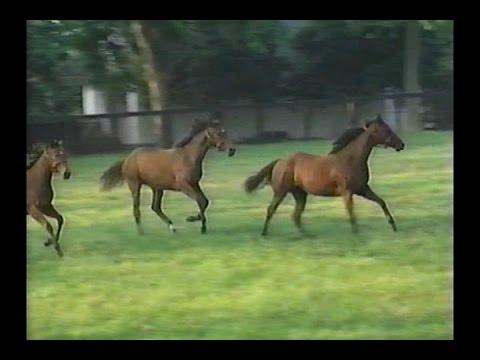 Horse Racing -