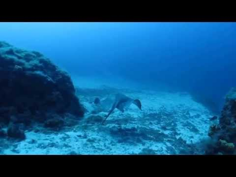 Scuba diving in Athens...accompanied by sting ray...