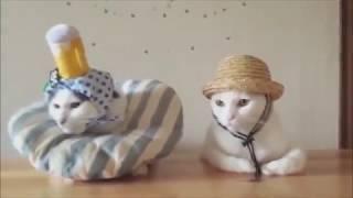 Классные приколы про животных. Смешная подборка с котами и кошками. Самые смешные видео 2018