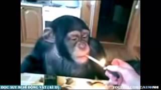 Đọc suy nghĩ động vật Tổng Hợp  - Tin Việt MC Trung Tô phần ( 4 )