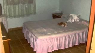 preview picture of video 'Alquiler o Venta Casa de campo en La Romana  en La Romana,'