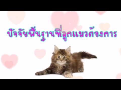 อะไรคือสัญญาณเมื่อหนอนลูกแมว