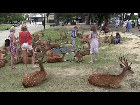 奈良公園 Nara Park in Japan