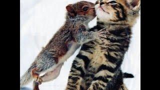 Прикольные животные. Ненавязчивые в  любви