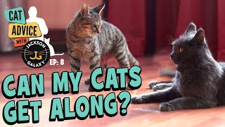 Can my Cats Get Along? Cat-to-Cat Body Language basics & Introduction Tips