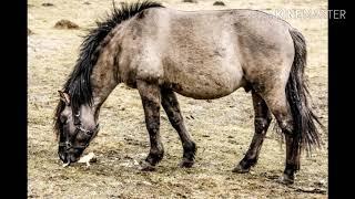 Животные, которые уже не водятся в Беларуси.