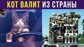 Приколы с котами. КОТ ВАЛИТ ИЗ СТРАНЫ | Мемозг #164