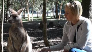Kænguru\\\'er & Koala\\\'er