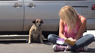 Abandoned senior German Shepherd hid under a car until Hope For Paws arrived.
