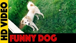 Funny Dog  Animals Are So Funny That You Can Die Of Laughter