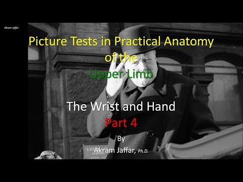 Picture Test in Anatomy Wrist and Hand 4