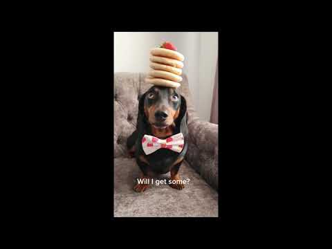 Cute Pets And Funny Animals Compilation #15
