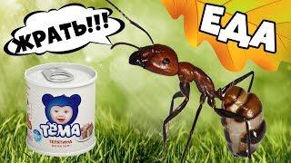 Муравьи пробуют детское питание - Дегустация