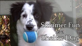 Are you ready for Summer  Our pets are wwwneasorg