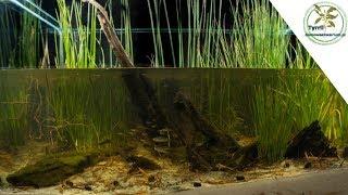 300l akwarium biotopowe- zatoczka w parku narodowym