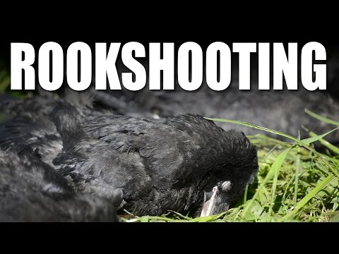 Rook shooting