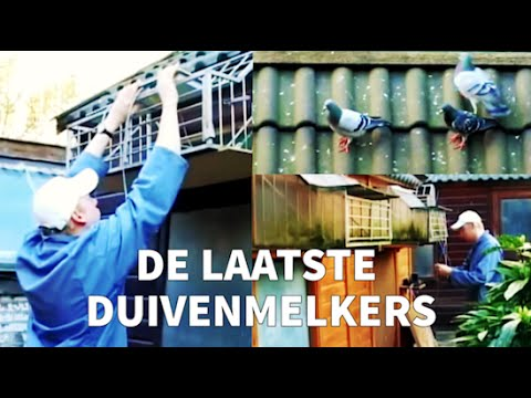 Video Duivenmelkers Amsterdam (2006)