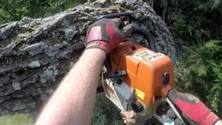 """Tree Work From Bucket Truck"""