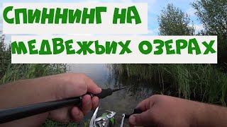 Платная рыбалка медвежьи озера у иванычара