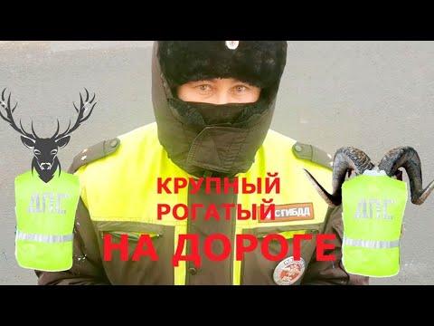 Возбуждающие полицию документы