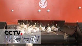 《我爱发明》 农田好帮手 5:同步精量深施肥装置 葡萄剪枝机 大蒜分选加工机 20190116   CCTV科教