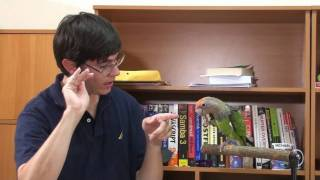 How to Teach Wave Trick to Parrot