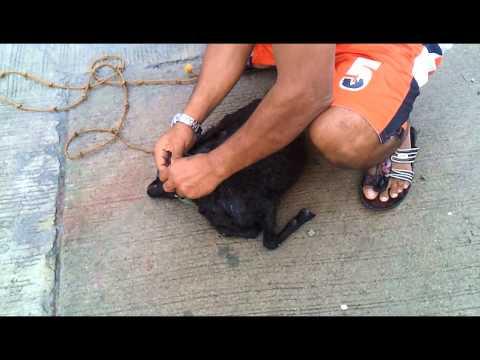 Matakot na uminom ng tablet mula sa mga worm