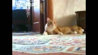 Thriller Cat - Wait for it!!!