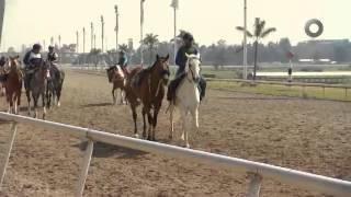D Todo - Carrera de caballos