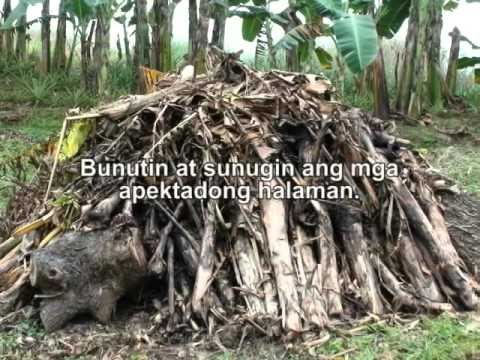 Buntis na kung paano mapupuksa ng worm
