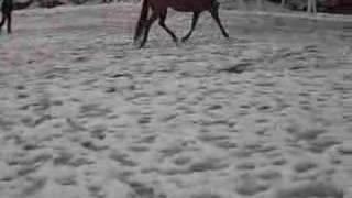 Topsail Docbill Snow American Quarter Horse
