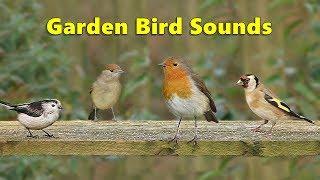 Garden Bird Sounds Spectacular - 8 HOURS ✅