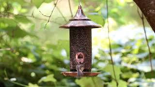 Новая кормушка для птичек