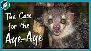 The Case for the Aye-Aye