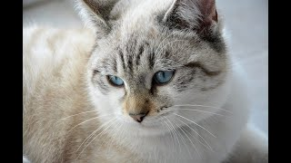 Cat videos funny for kids and Cat Funny videos Cats are so funny Baby