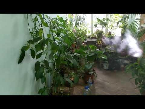 Thăm quan bộ môn thực vật của trường đại học lâu đời nhất thế giới