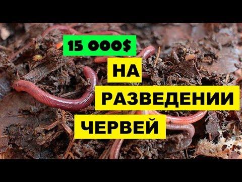 Вермиферма своими руками как бизнес идея | 15 000$ на разведении червей