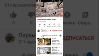 Кот и лиса вирусное видео  пересьемка