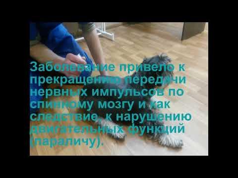 Моника - успешное лечение паралича у собаки
