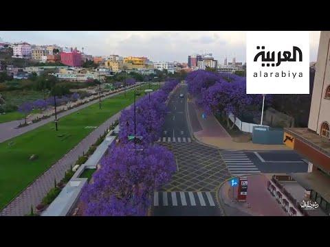 العرب اليوم - شاهد: أبها تتباهى بثوبها البنفسجي والأغنام تجتاح مدينة تركية
