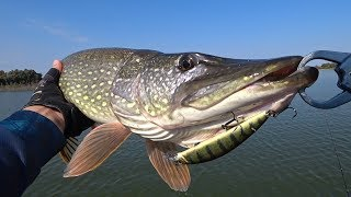 Воблер grfish haker 75f dd