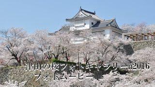 津山の桜フォトギャラリーin2016 フォトムービー