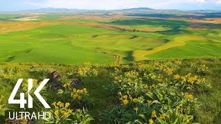 8 HOURS of Birdsong and Wind Whisper - Relaxing Atmosphere of Steppe Flower Fields - 4K Ultra HD