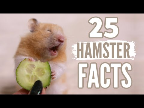 , title : '25 Facts About Hamsters 🐹