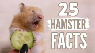 25 Facts About Hamsters 🐹