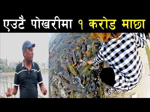 काठमाण्डौको सबै भन्दा ठुलो पोखरीमा भेटियो १ करोड माछा - Biggest fish farming of Kathmandu Valley