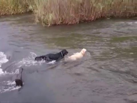 INCREDIBLE VIDEO OF DOG RESCUING DOG