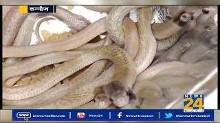 UP के कन्नौज में एक घर में निकले कई किंग कोबरा    News 24