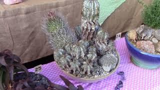 Palomar Cactus & Succulent Society 2018 San Diego County Fair Exhibit
